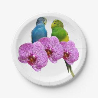 Prato De Papel Budgie com orquídea roxa