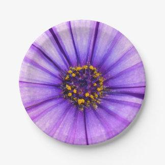 Prato De Papel Macro violeta roxo da flor da margarida