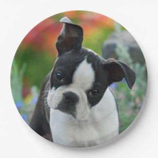 Prato De Papel Retrato do filhote de cachorro do cão de Boston
