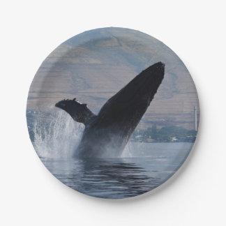 Prato De Papel rompimento da baleia de humpback