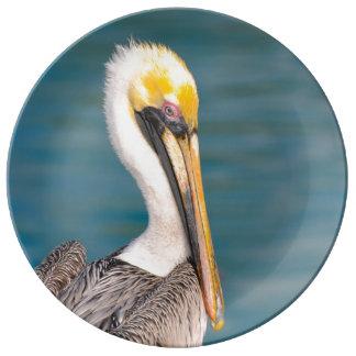 Prato De Porcelana Fim do retrato do pelicano acima com o oceano no