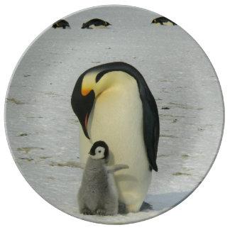 Prato De Porcelana Oceano antárctico dos pássaros da praia da neve do