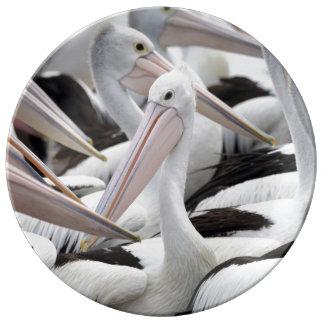 Prato De Porcelana Vagem dos pelicanos