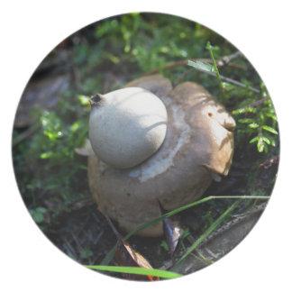 Prato Earthstar franjado (fimbriatum do Geastrum)