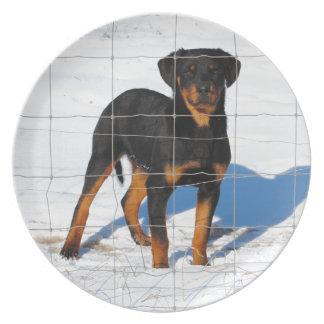 Prato Lobo Rottweiler