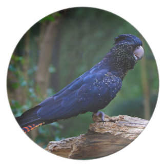 Prato pássaro Vermelho-atado do cockatoo