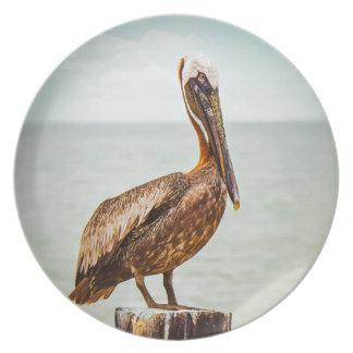 Prato Pelicano bonito empoleirado sobre o oceano