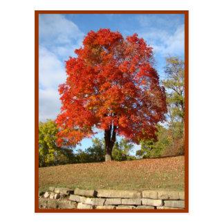 Prazeres do outono cartão postal