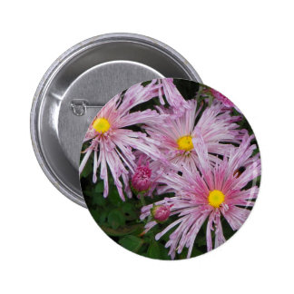 Presente cor-de-rosa da foto da flor bóton redondo 5.08cm