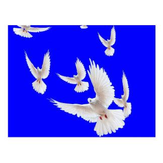 Presentes brancos dos azuis cobaltos das pombas cartão postal