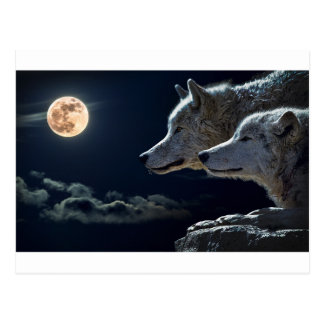 Presentes do lobo cartão postal