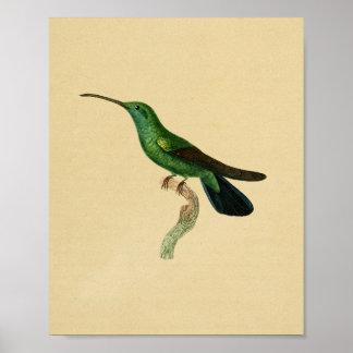 Preto 1830 do verde do impressão do colibri do