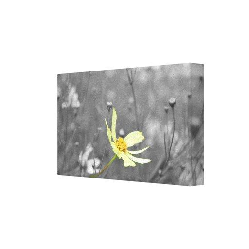 Preto & branco impressão de canvas envolvidas