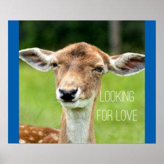 Procurando o amor - poster animal engraçado