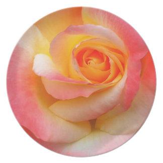 Produtos alaranjados, amarelos, e do rosa do rosa  prato