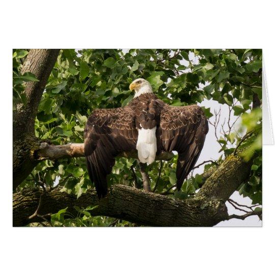 Propagação Eagle Cartão Comemorativo
