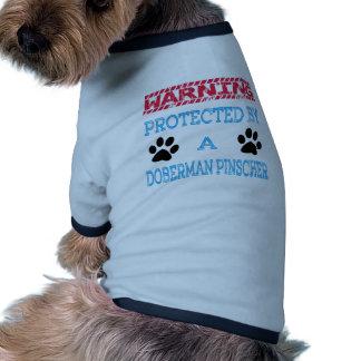 Protegido por um cão do pinscher do Doberman Camisa Ringer Para Cachorro