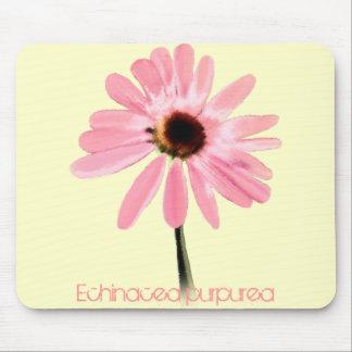 Purpurea do Echinacea