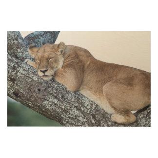 Quadro De Madeira Leoa que dorme na árvore