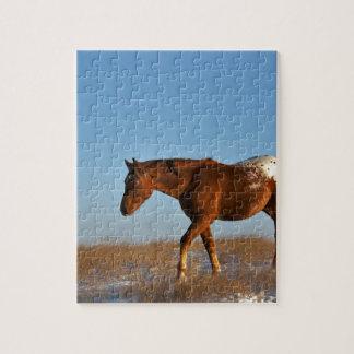Quebra-cabeça Cavalo da pradaria