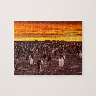 Quebra-cabeça Colônia no por do sol, Malvinas do pinguim