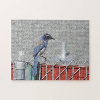 Quebra-cabeça - Esfregar-Jay ocidental na cerca