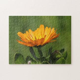 Quebra-cabeça - flor do Calendula Quebra-cabeças