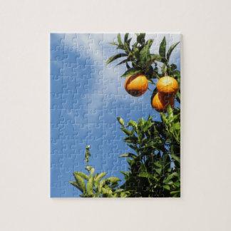 Quebra-cabeça Frutas alaranjadas que penduram na árvore contra o