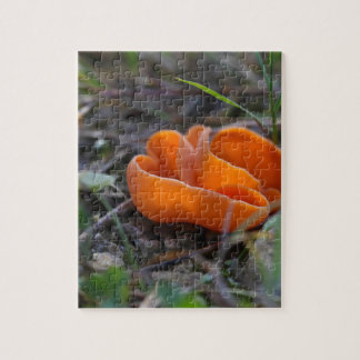 Quebra-cabeça Fungo de casca alaranjada, aurantia de Aleuria