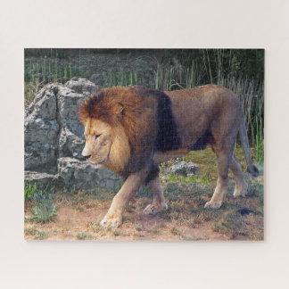 Quebra-cabeça Leão bonito que anda entre rochas -