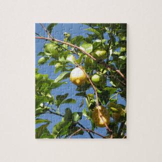 Quebra-cabeça O limão frutifica pendurando na árvore contra o