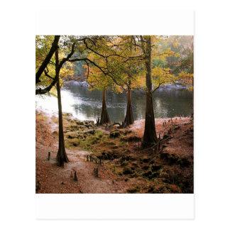 Queda da árvore no rio calmo cartão postal