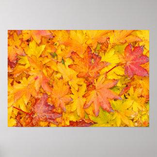 Queda decorativa vermelha e amarela das folhas de poster