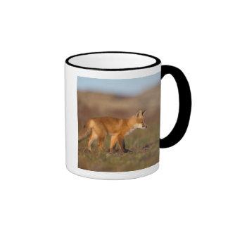 raposa vermelha, vulpes do Vulpes, ao longo da cen Caneca