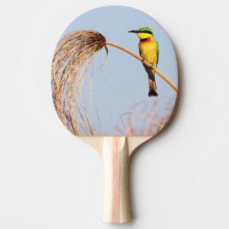 Raquete De Ping Pong Fim-acima de um pássaro pequeno do abelha-comedor