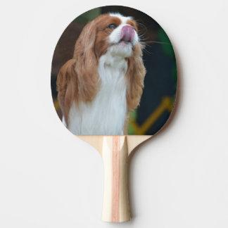 Raquete De Tênis De Mesa Spaniel de rei Charles descuidado doce
