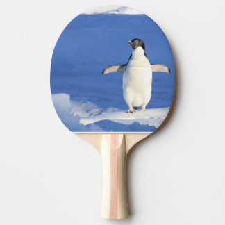 RAQUETE PARA PING-PONG PINGUIM