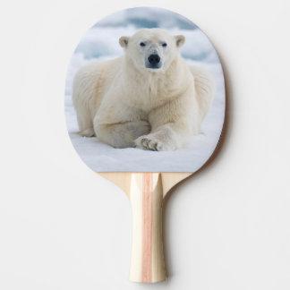 Raquete Para Tênis De Mesa Urso polar adulto no gelo de bloco do verão