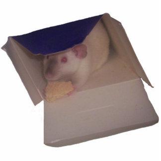 rato siamese do dumbo em uma caixa escultura de fotos