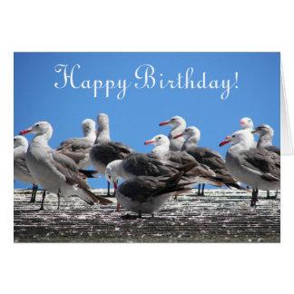 Rebanho da foto das gaivotas de todo o cartão de