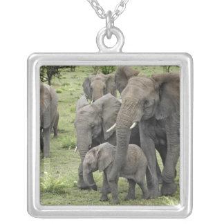 Rebanho do elefante africano, africana do colar banhado a prata