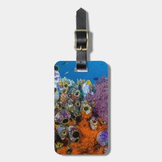 Recife de corais e peixes etiqueta de bagagem