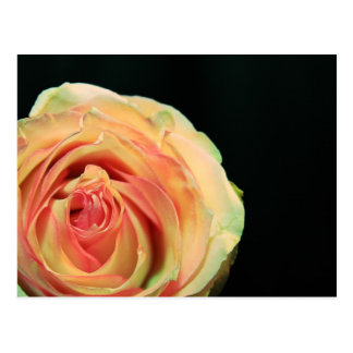 Reflexões cor-de-rosa cartão postal