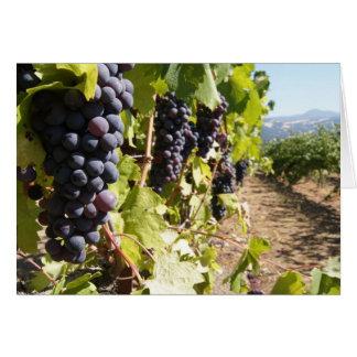 Região vinícola de Califórnia Cartão Comemorativo