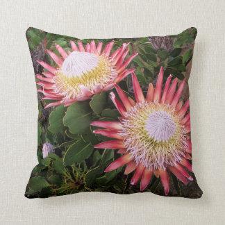 Rei Protea (Protea Cynaroides), Helderberg Travesseiros