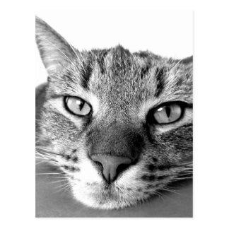 Relaxamento preguiçoso do gato, preto & branco cartão postal