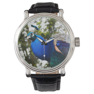 Relógio O pavão ou transfere arquivos pela rede sua foto,