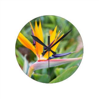 Relógio Redondo Feche acima da flor do guindaste ou do reginaei do