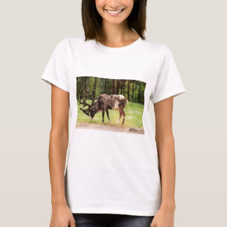 Rena T-shirts