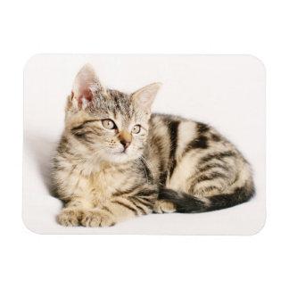 Retrato bonito do gato de gato malhado foto com ímã retangular